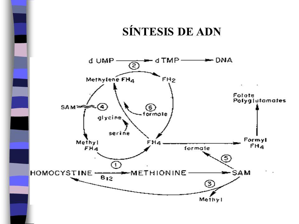 SÍNTESIS DE ADN