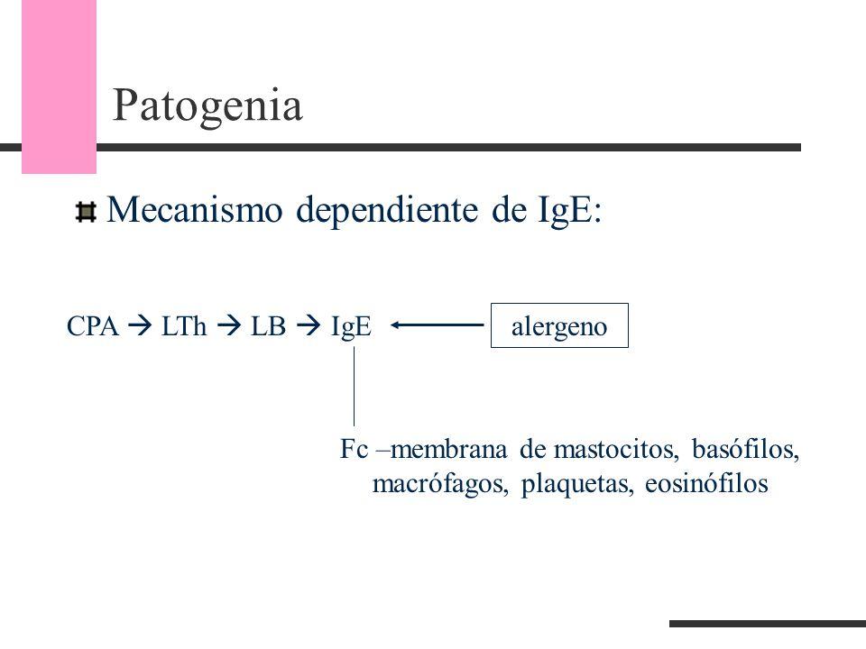 Patogenia Mecanismo dependiente de IgE: CPA  LTh  LB  IgE alergeno