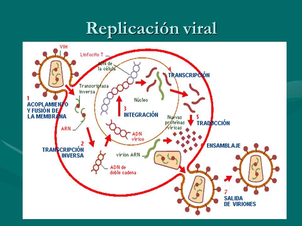 Replicación viral