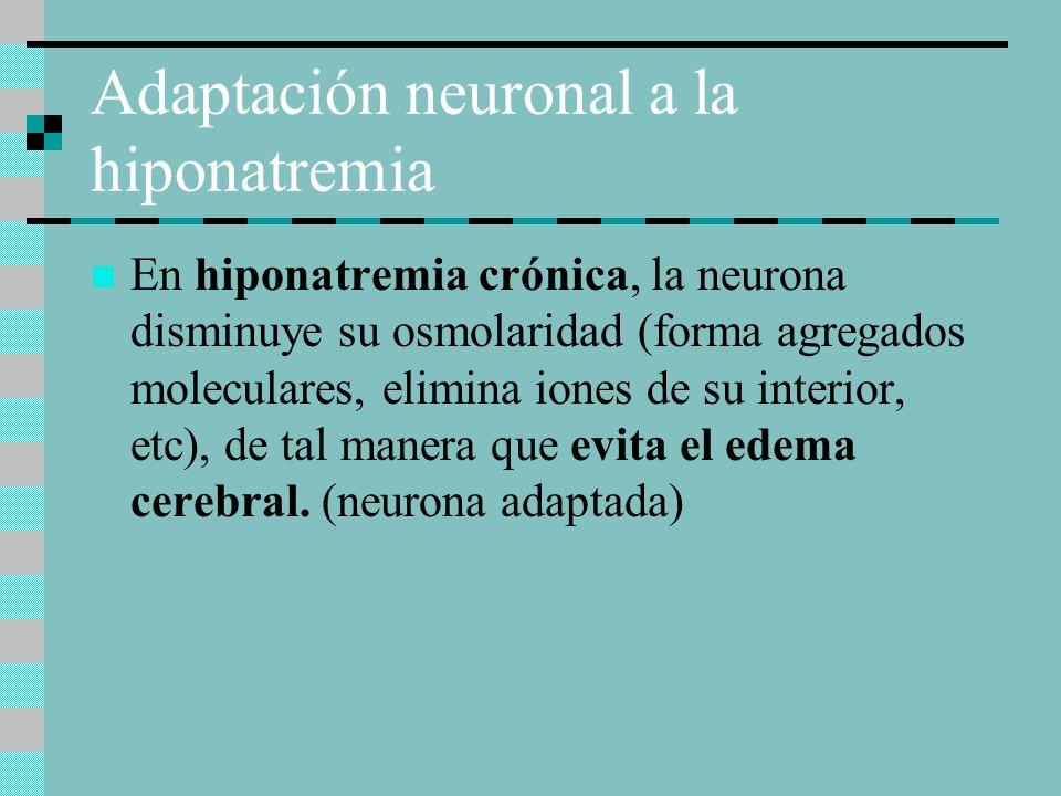 Adaptación neuronal a la hiponatremia