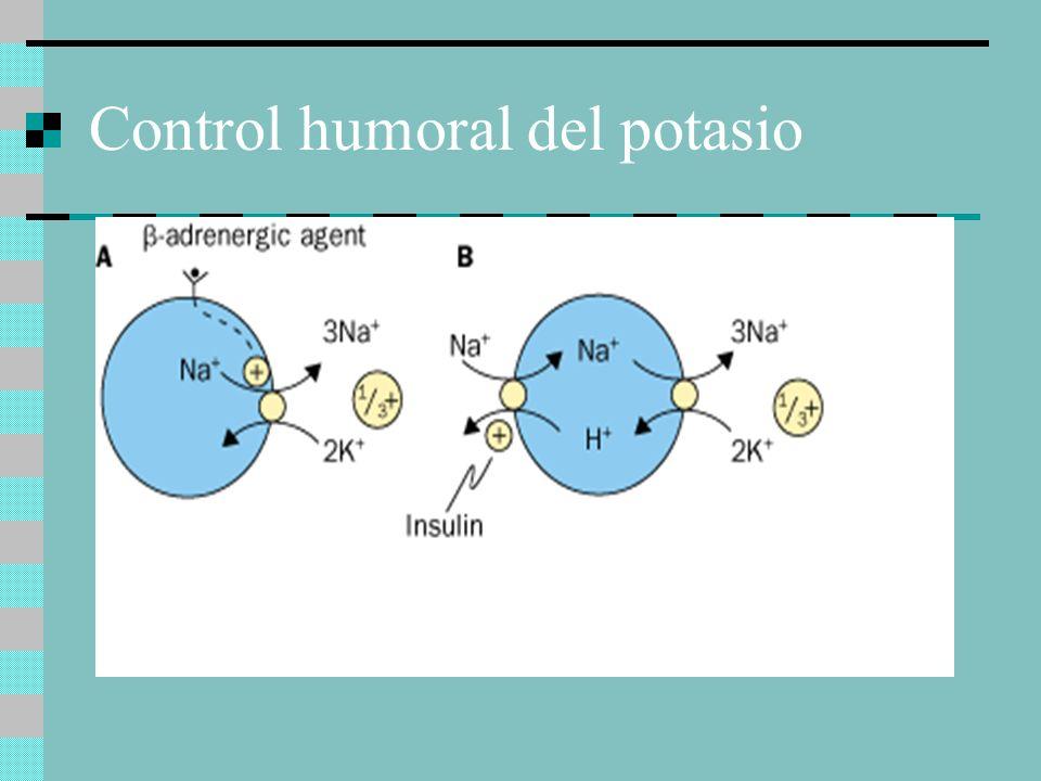 Control humoral del potasio