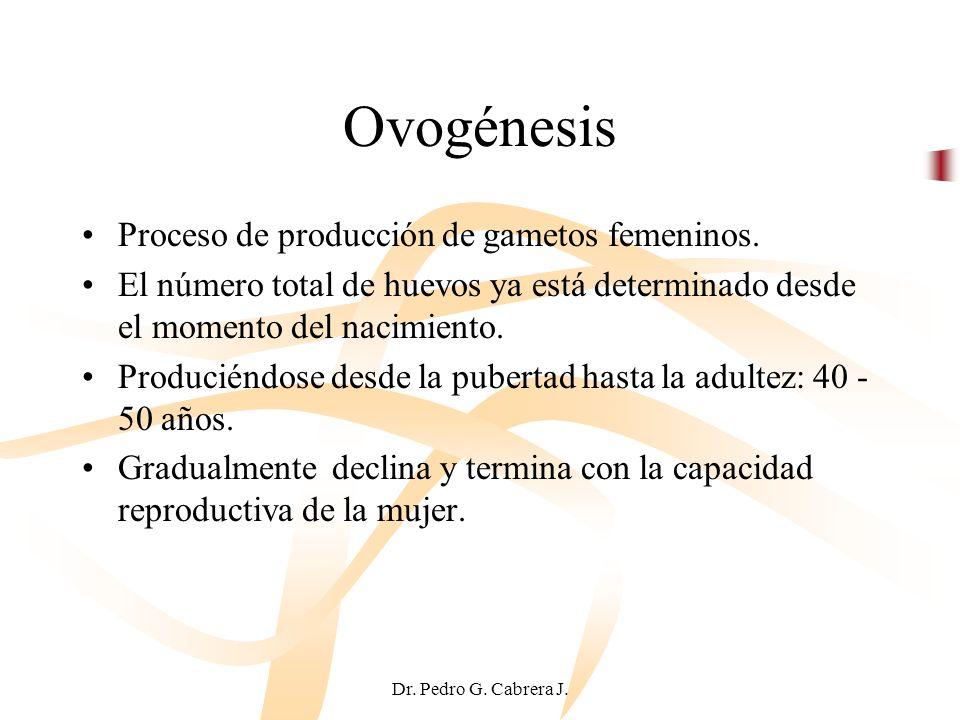 Ovogénesis Proceso de producción de gametos femeninos.