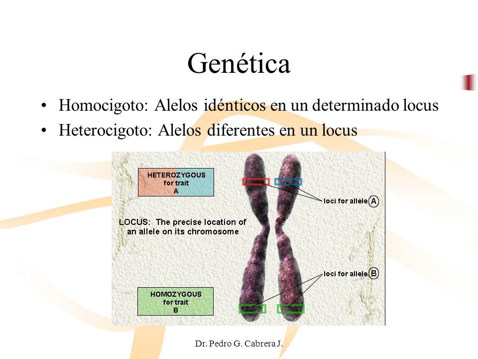 Genética Homocigoto: Alelos idénticos en un determinado locus