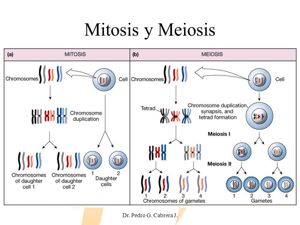 Mitosis y Meiosis Dr. Pedro G. Cabrera J.