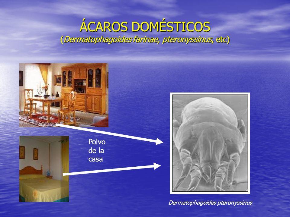 ÁCAROS DOMÉSTICOS (Dermatophagoides farinae, pteronyssinus, etc)