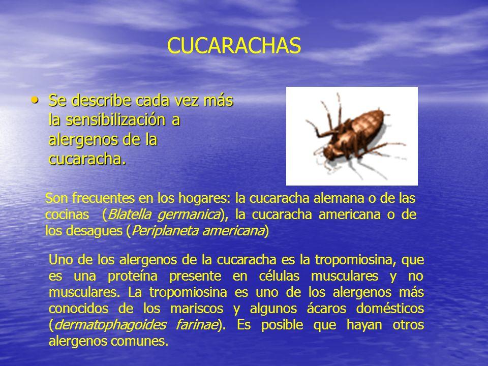 CUCARACHAS Se describe cada vez más la sensibilización a alergenos de la cucaracha.