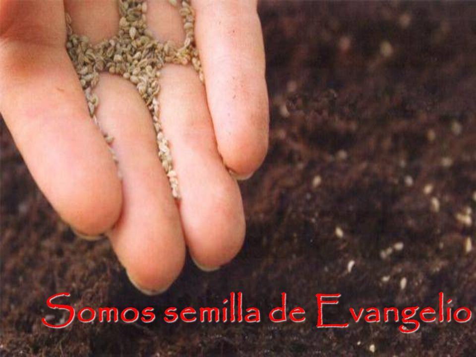 Somos semilla de Evangelio