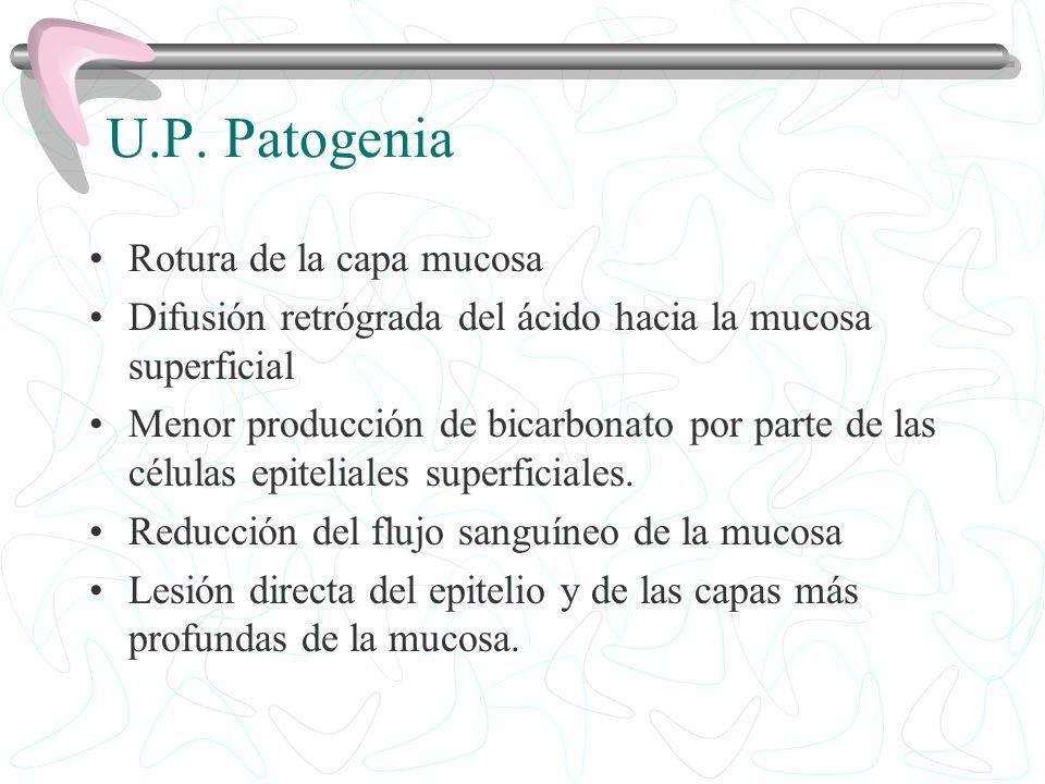 U.P. Patogenia Rotura de la capa mucosa