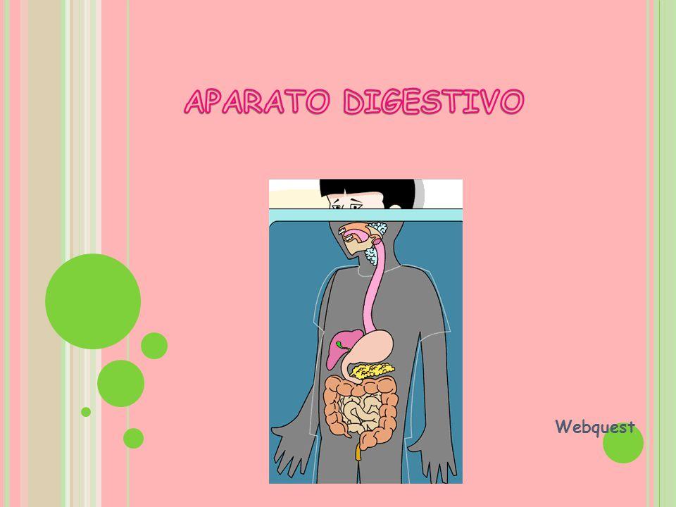 APARATO DIGESTIVO Webquest