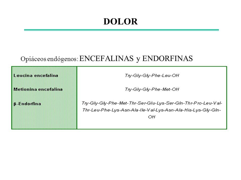 DOLOR Opiáceos endógenos: ENCEFALINAS y ENDORFINAS