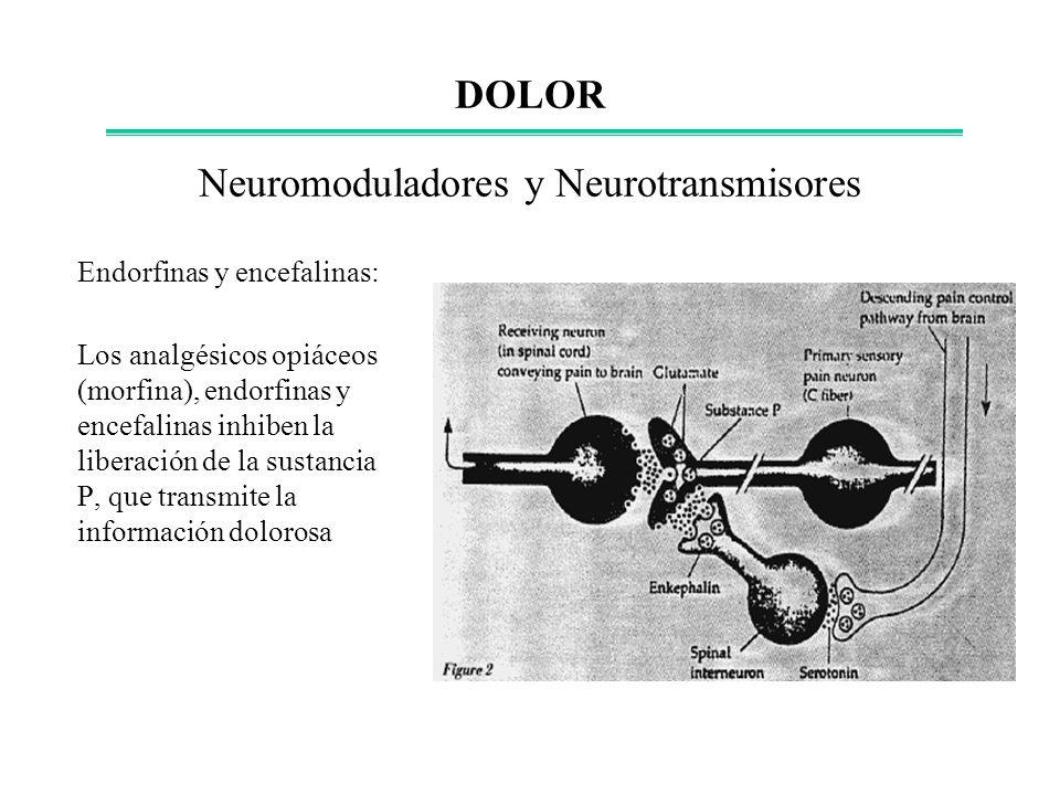 Neuromoduladores y Neurotransmisores