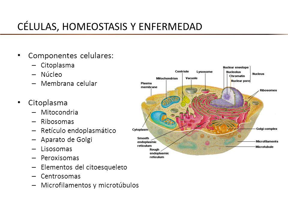 Células, homeostasis y enfermedad