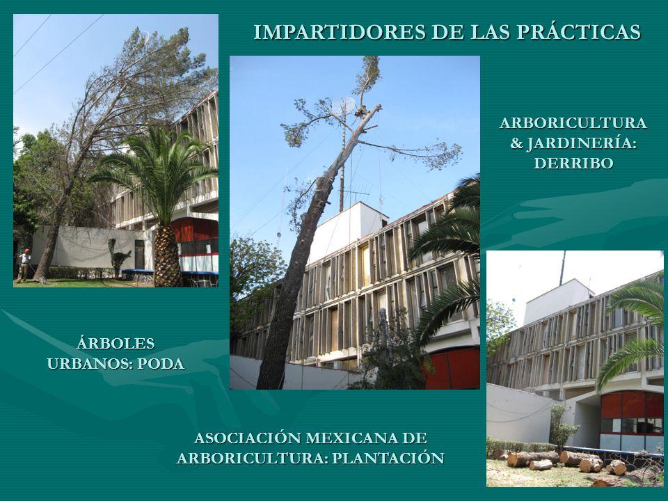 IMPARTIDORES DE LAS PRÁCTICAS