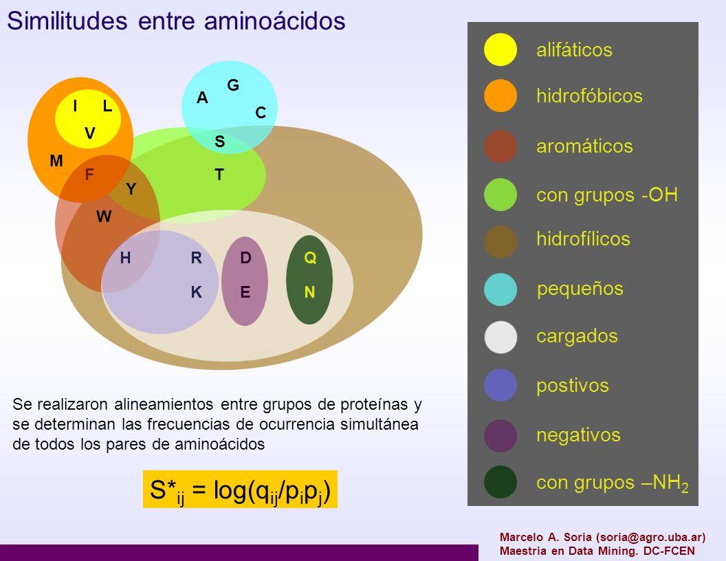 Similitudes entre aminoácidos