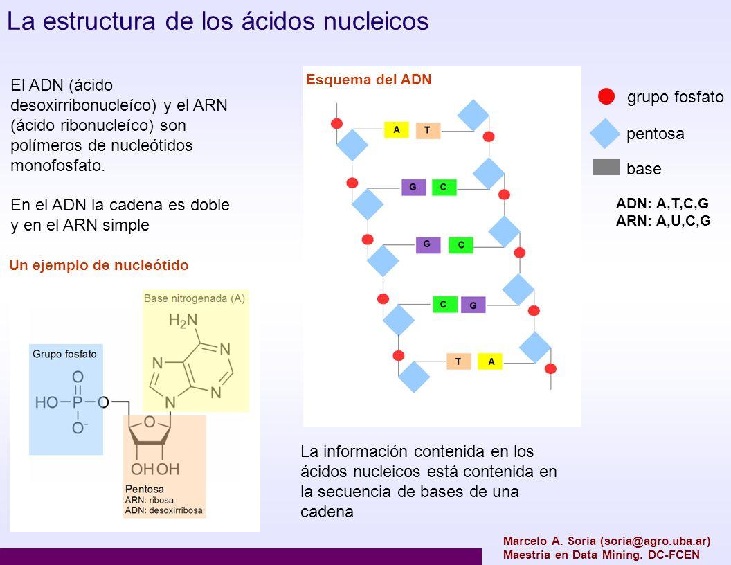 La estructura de los ácidos nucleicos