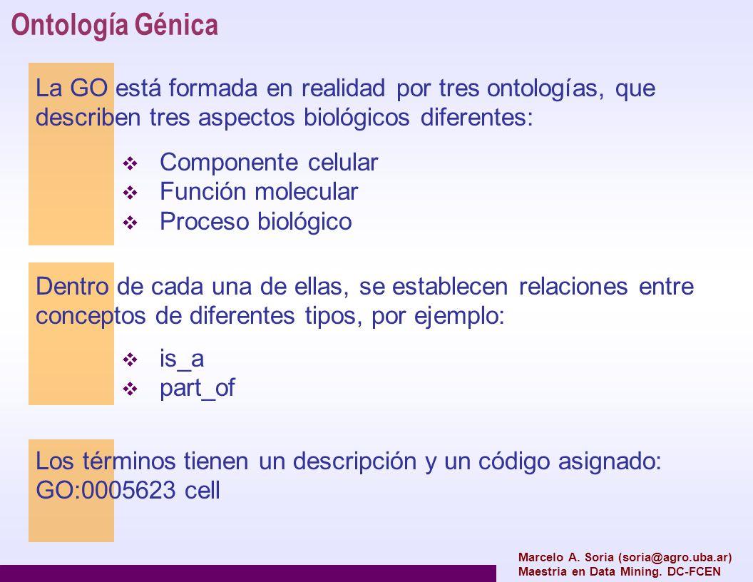 Ontología Génica La GO está formada en realidad por tres ontologías, que describen tres aspectos biológicos diferentes: