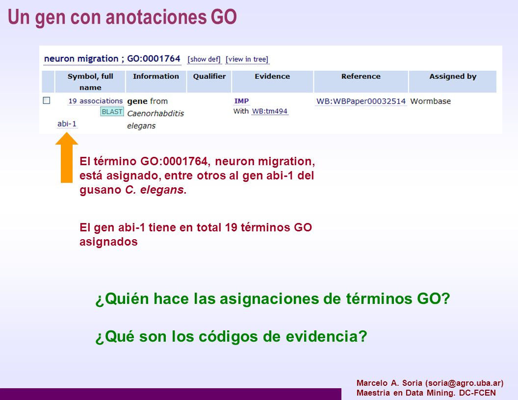 Un gen con anotaciones GO