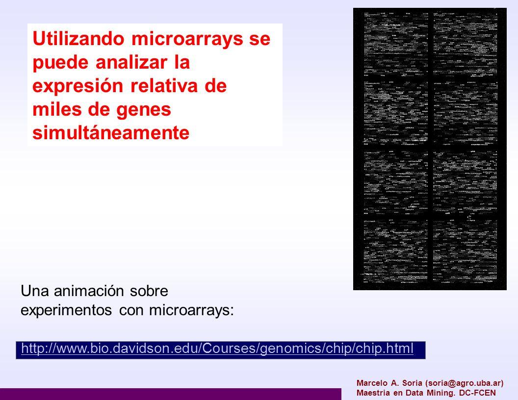 Utilizando microarrays se puede analizar la expresión relativa de miles de genes simultáneamente