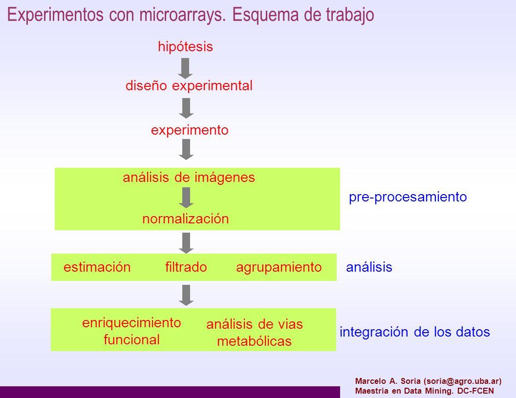 Experimentos con microarrays. Esquema de trabajo
