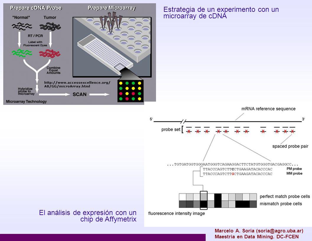 Estrategia de un experimento con un microarray de cDNA