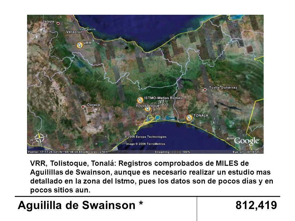 Aguililla de Swainson * 812,419