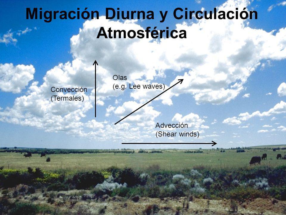 Migración Diurna y Circulación Atmosférica