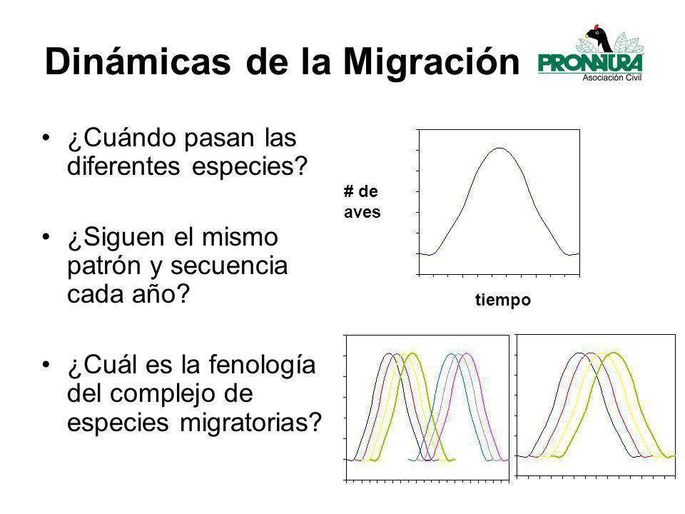 Dinámicas de la Migración