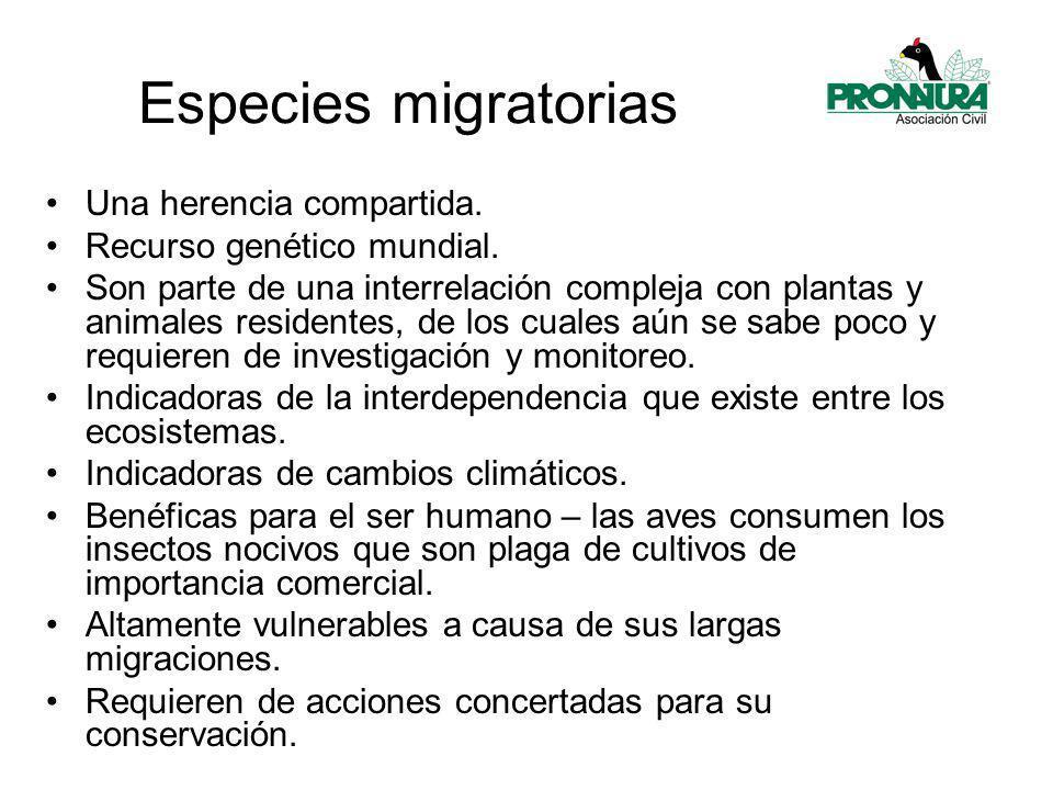 Especies migratorias Una herencia compartida.