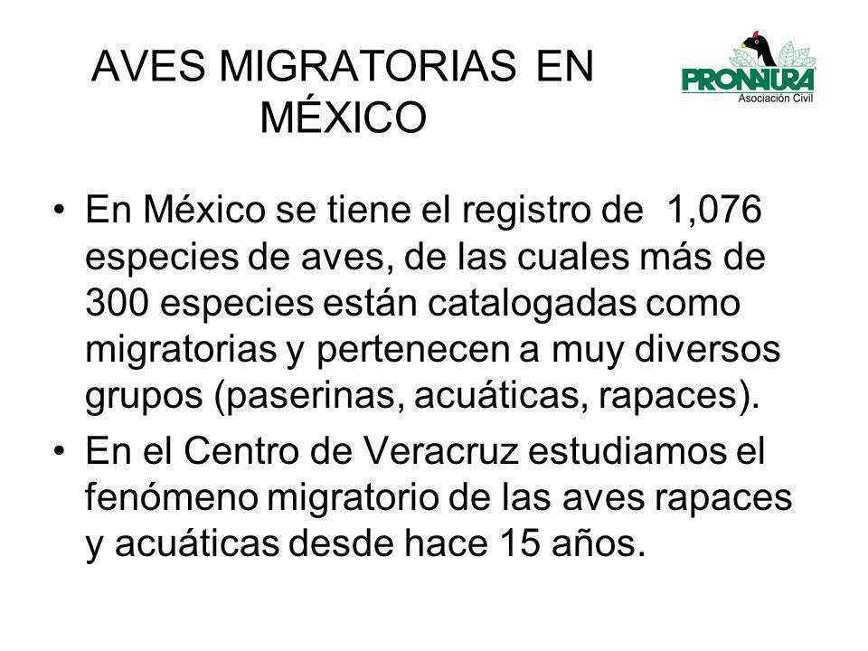 AVES MIGRATORIAS EN MÉXICO