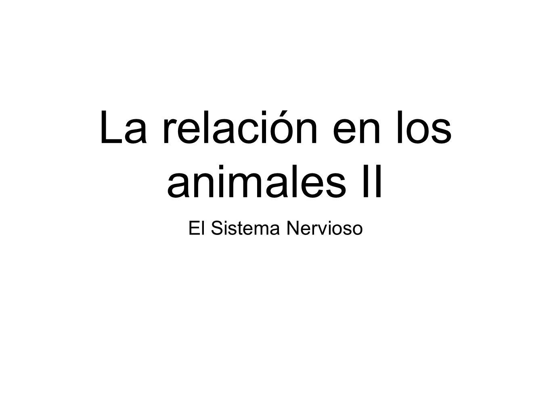 La relación en los animales II