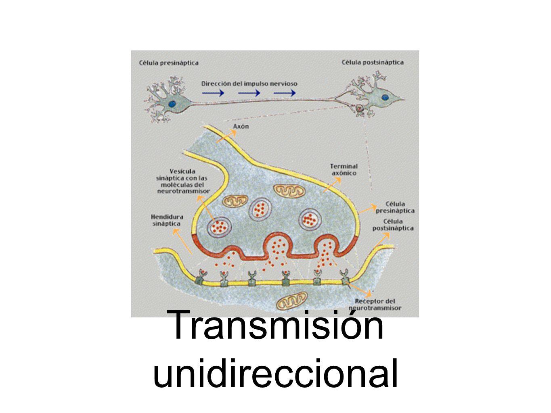 Transmisión unidireccional