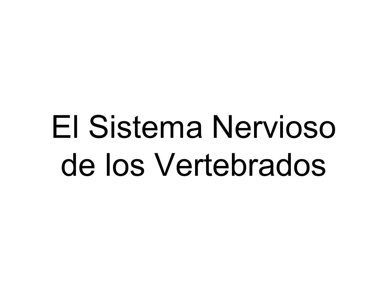 El Sistema Nervioso de los Vertebrados