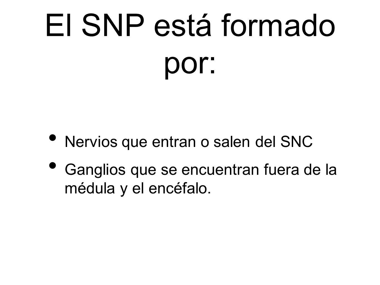 El SNP está formado por: