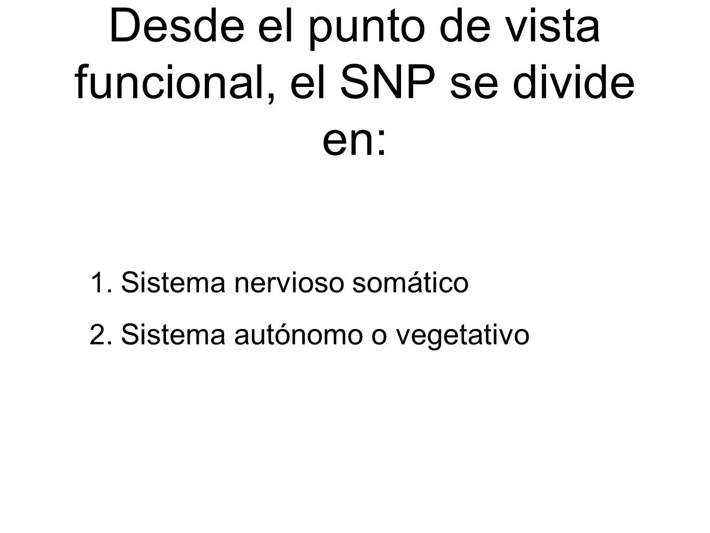Desde el punto de vista funcional, el SNP se divide en: