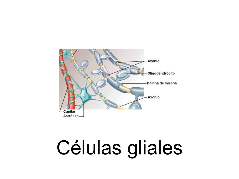 Células gliales