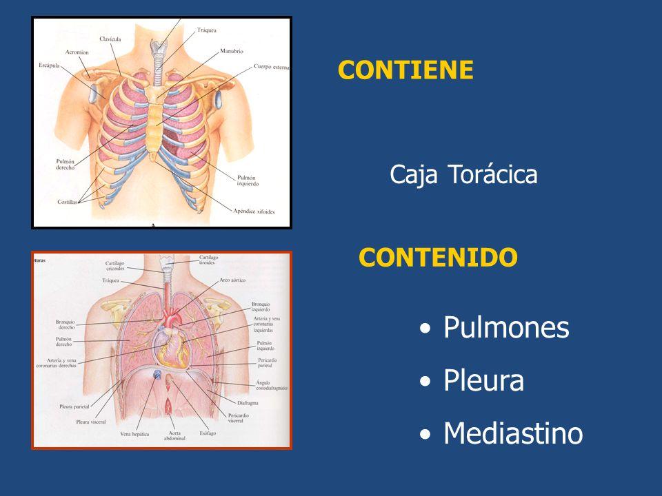 CONTIENE Caja Torácica CONTENIDO Pulmones Pleura Mediastino