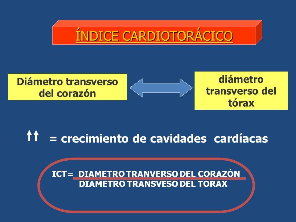 diámetro transverso del tórax Diámetro transverso del corazón