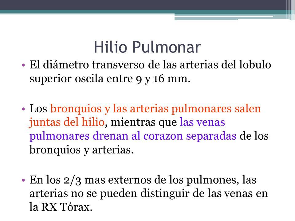 Hilio Pulmonar El diámetro transverso de las arterias del lobulo superior oscila entre 9 y 16 mm.