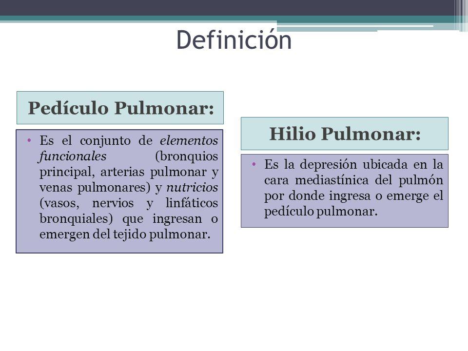 Definición Pedículo Pulmonar: Hilio Pulmonar: