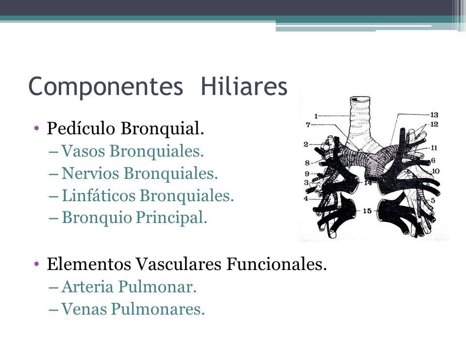 Componentes Hiliares Pedículo Bronquial.
