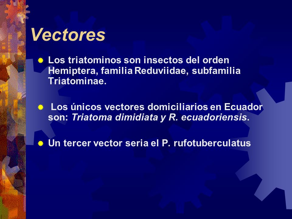 VectoresLos triatominos son insectos del orden Hemiptera, familia Reduviidae, subfamilia Triatominae.