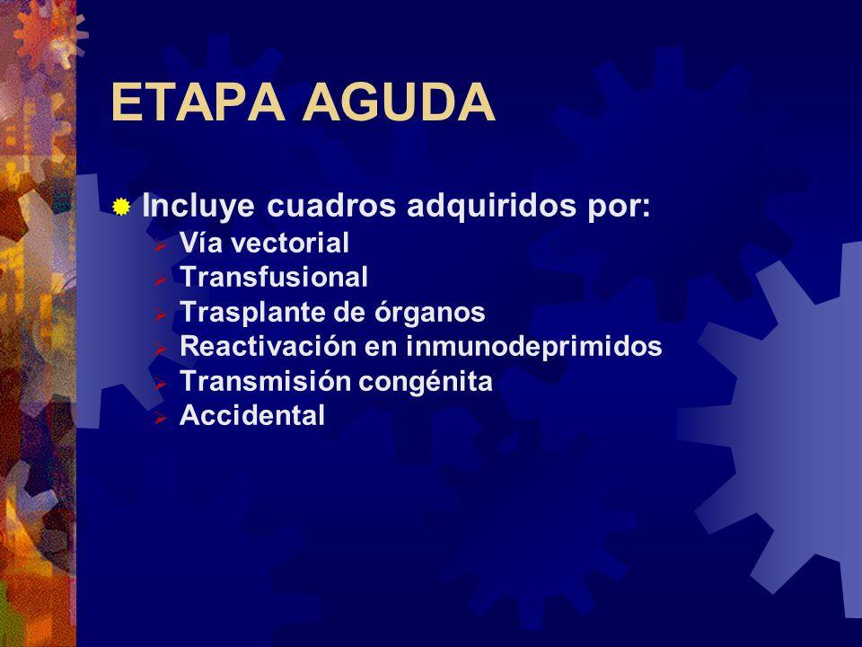 ETAPA AGUDA Incluye cuadros adquiridos por: Vía vectorial