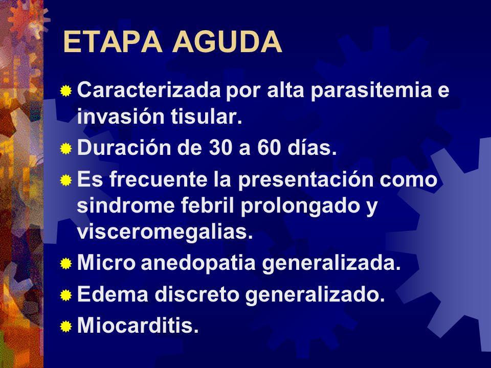 ETAPA AGUDA Caracterizada por alta parasitemia e invasión tisular.