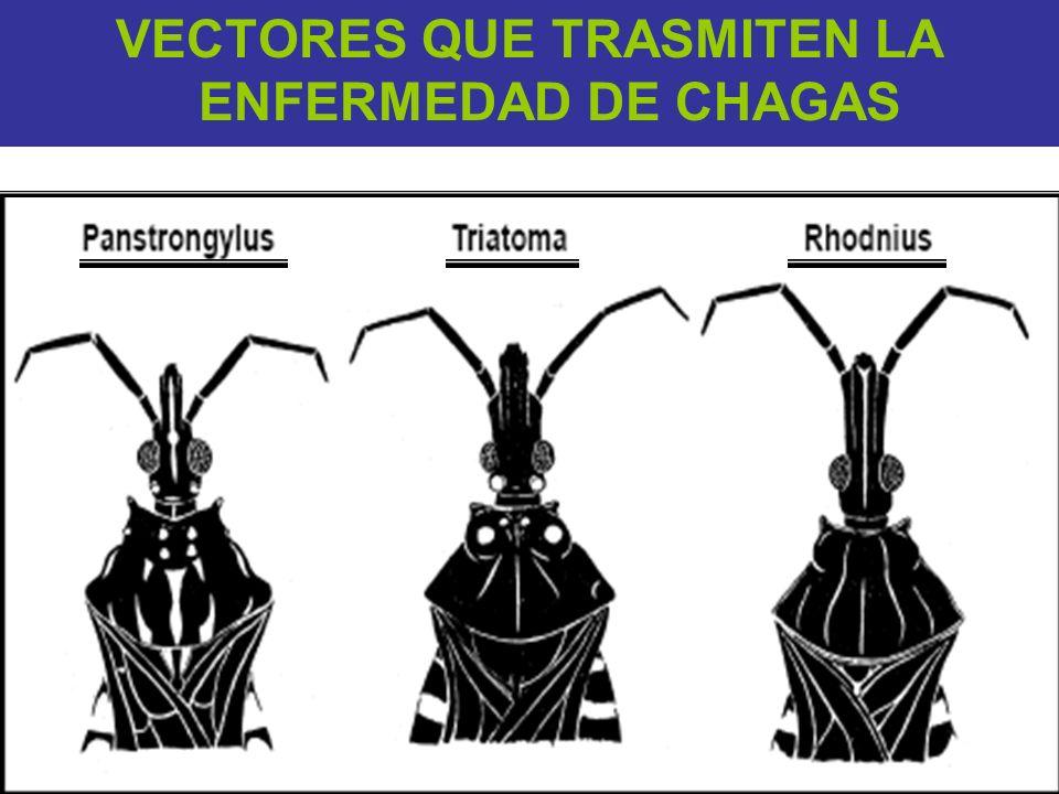 VECTORES QUE TRASMITEN LA ENFERMEDAD DE CHAGAS