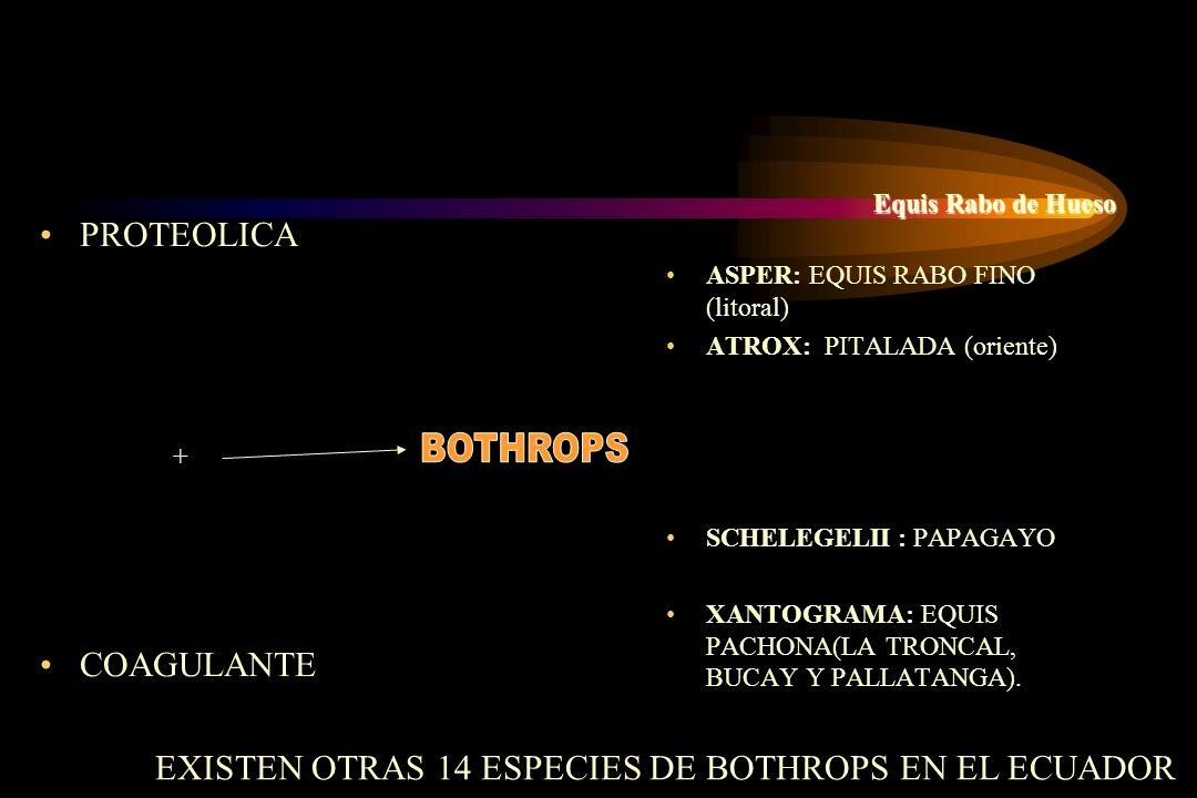 BOTHROPS EXISTEN OTRAS 14 ESPECIES DE BOTHROPS EN EL ECUADOR