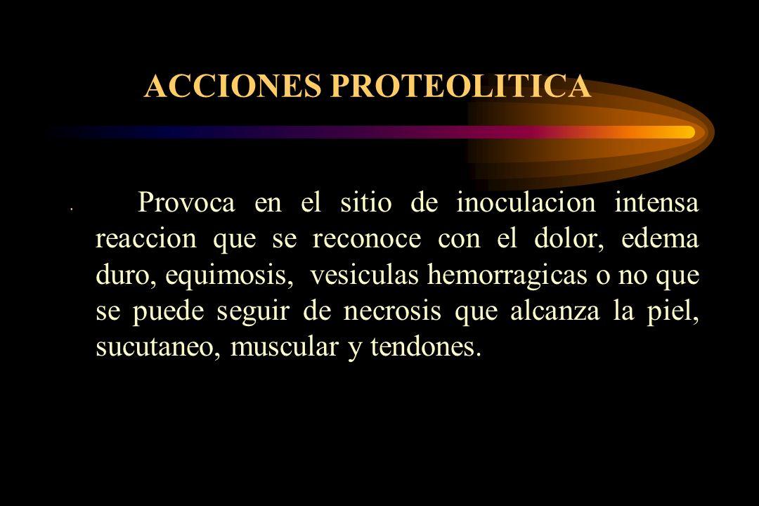 ACCIONES PROTEOLITICA