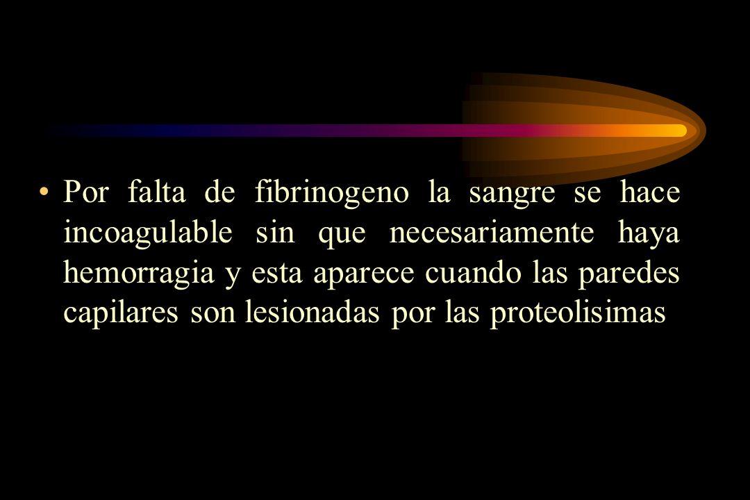 Por falta de fibrinogeno la sangre se hace incoagulable sin que necesariamente haya hemorragia y esta aparece cuando las paredes capilares son lesionadas por las proteolisimas