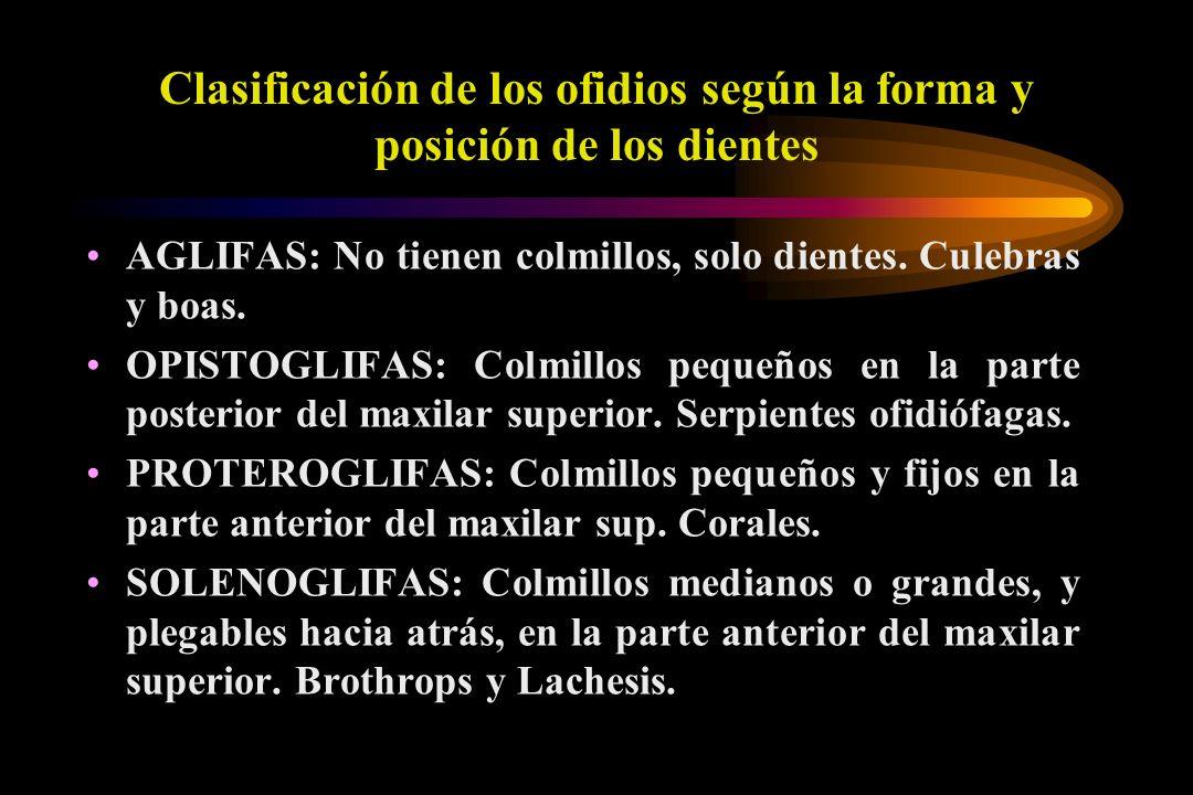 Clasificación de los ofidios según la forma y posición de los dientes