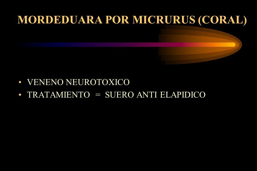 MORDEDUARA POR MICRURUS (CORAL)