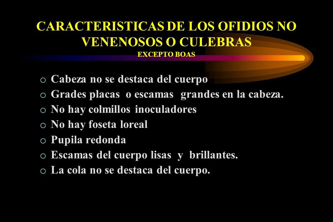 CARACTERISTICAS DE LOS OFIDIOS NO VENENOSOS O CULEBRAS EXCEPTO BOAS